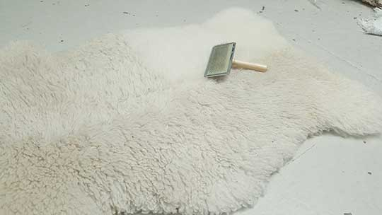 Brushing a sheephide rug