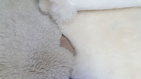 Sheepskin Hide-not clean vs Clean